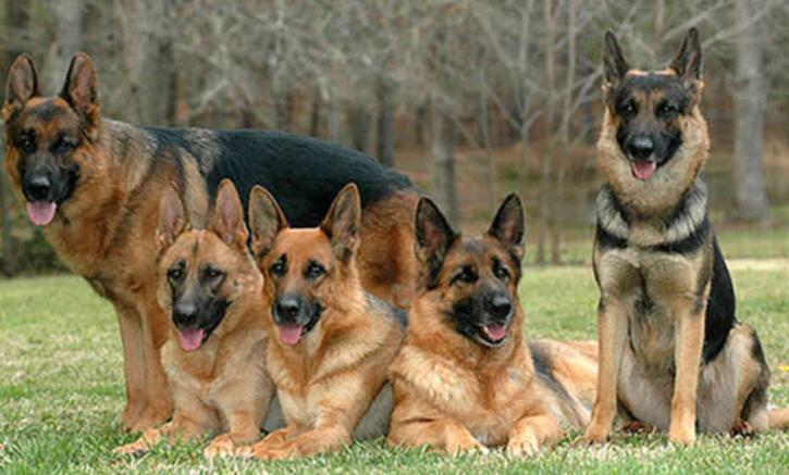 الكلاب الضالة تفترس شابا بجماعة لمحرة اقليم الرحامنة