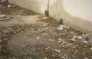 طوفان المياه العادمة وجيوش الحشرات تحاصر مدخل مراكش وتنساب فوق إسفلت الطريق الوطنية رقم 8