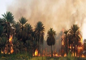 حقيقة الحريق الذي التهم نخيل دوار الكدية بمراكش