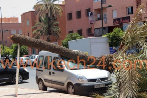 نخلة تتسبب في خسائر جسيمة لسيارة بشارع علال الفاسي بمراكش + صورة حصرية