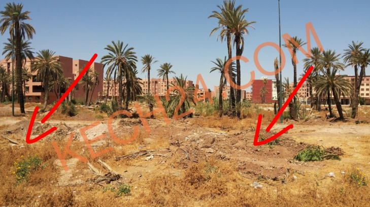 إبادة أشجار النخيل بحي الشرف بمراكش والسلطات تلتزم الصمت + صورة بدون تعليق