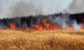 حصري: النيران تلتهم محصولا زراعيا بكامله لكبار فلاحي أغواطيم نواحي الحوز