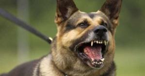 كلب مسعور يرسل ستة أشخاص من بينهم سيدة حامل الى المستشفى بمراكش