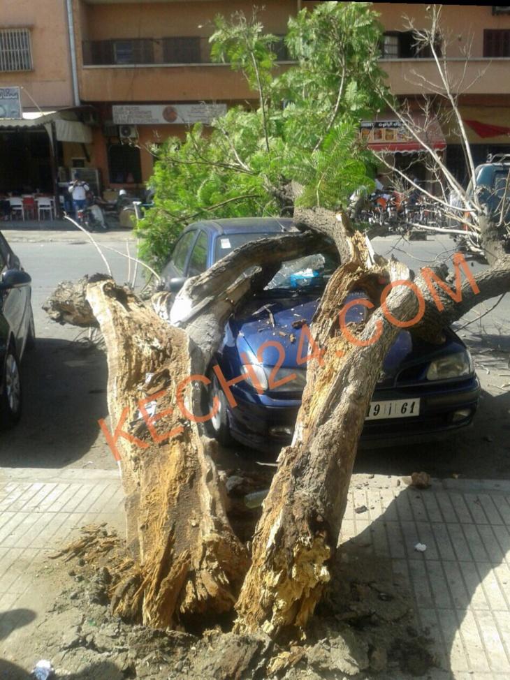 بالصور : سقوط شجرة بشارع مولاي رشيد بمراكش