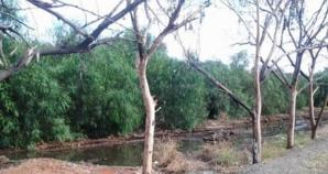 جريمة بيئية...نفايات المنطقة الصناعية تجهز على أشجار غابة سيدي بوعثمان بإقليم ابن جرير