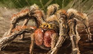 سم عنكبوت برازيلي يساعد على الانتصاب عند الرجال بدلاً من