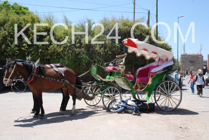 حصان يَتمرَّد على سائق