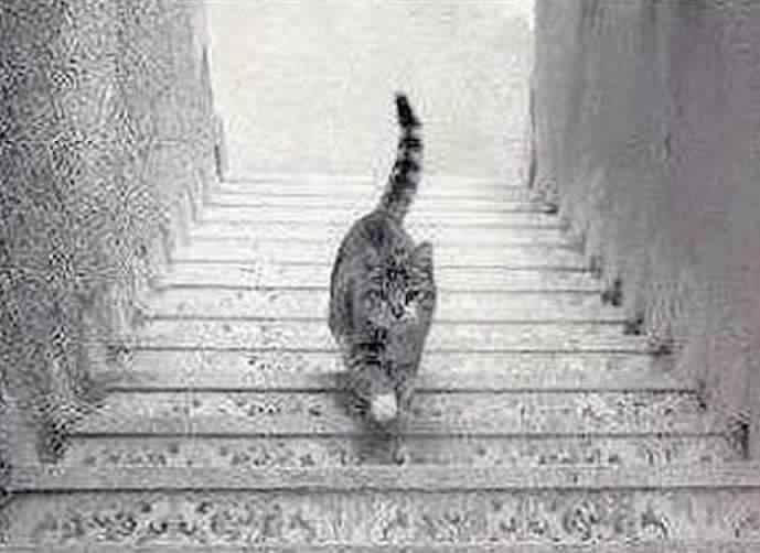 هل القط نازل من الدرج أم صاعد بشكل معكوس؟