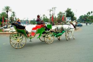 حصان يثور على سائق