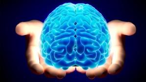 العدوانية سببها موت خلايا الدماغ