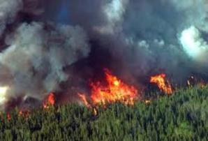 حريق يأتي على جزء كبير من غابة نواحي شيشاوة + تفاصيل