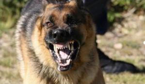 خطير: كلب مسعور يَعضُّ ثلاثة أشخاص بينهم طفل بحي الإزدهار بمراكش ولا يزال حرا طليقا