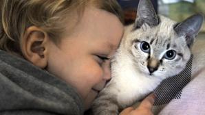 5 حيوانات تساعد في علاج المرضى