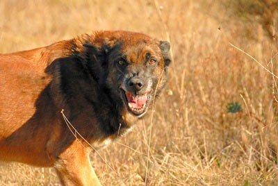 كلب مسعور ينهش طفلا بإمنتانوت وهلع وسط المواطنين