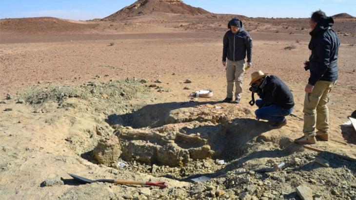 العثور على هيكل عظمي لتمساح ضخم يعود الى ما قبل التاريخ بتونس