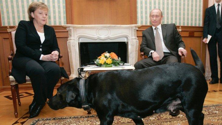 بوتين يعتذر لميركل عن إخافتها بالكلبة