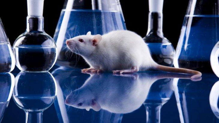 علماء: العدوانية تسبب نشوء خلايا عصبية جديدة في الدماغ