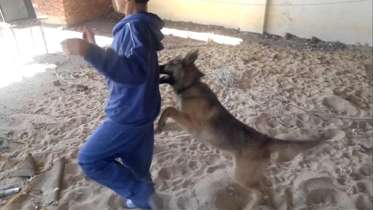الكلاب الضالة ترعب ساكنة ايمينتانوت