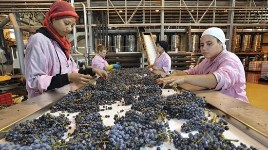 المغرب ينتج 35 مليون زجاجة من النبيذ يوميا حسب الفايننشال تايمز