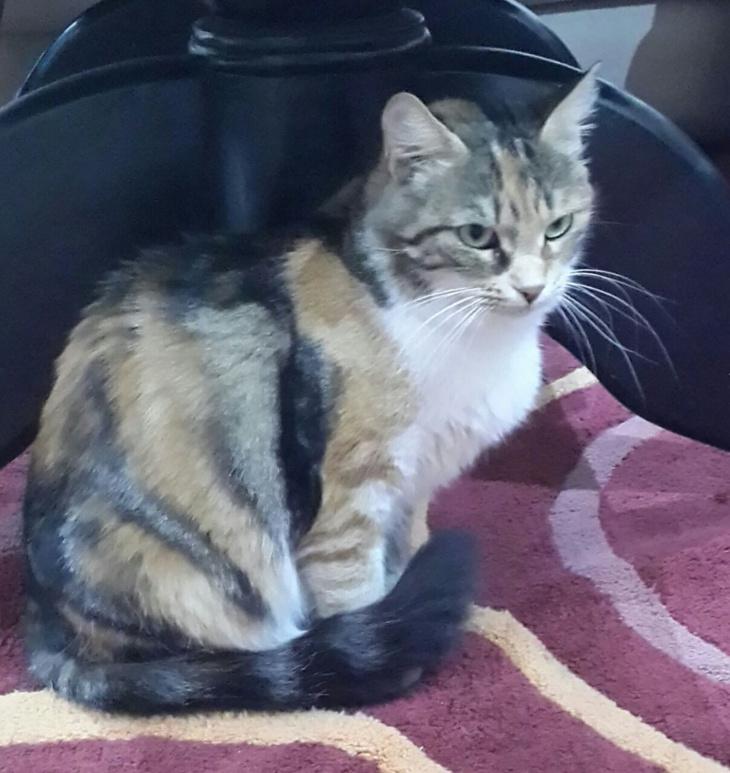 هكذا إستنفرت قطة رجال الوقاية المدنية بمراكش + صورة