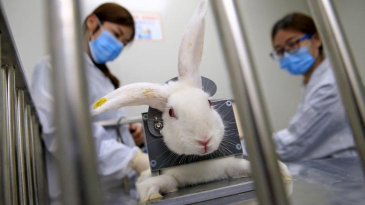 الهند تحظر استخدام الحيوانات في الاختبارات