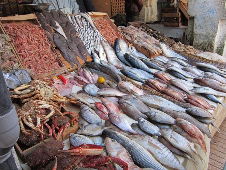 تسجيل ارتفاع ملموس في الكميات المسوقة من الأسماك وفق المكتب الوطني للصيد البحري