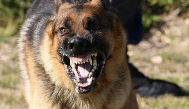 كلبة مسعورة تعض مواطنين وتخلق حالة من الإستنفار بالمدينة العتيقة لمراكش