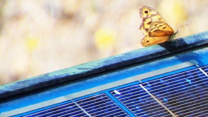 مخترعون يطورون بطاريات شمسية تُزرع تحت الجلد