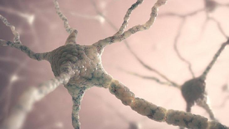 اكتشاف بروتين يحمي من الزهايمر