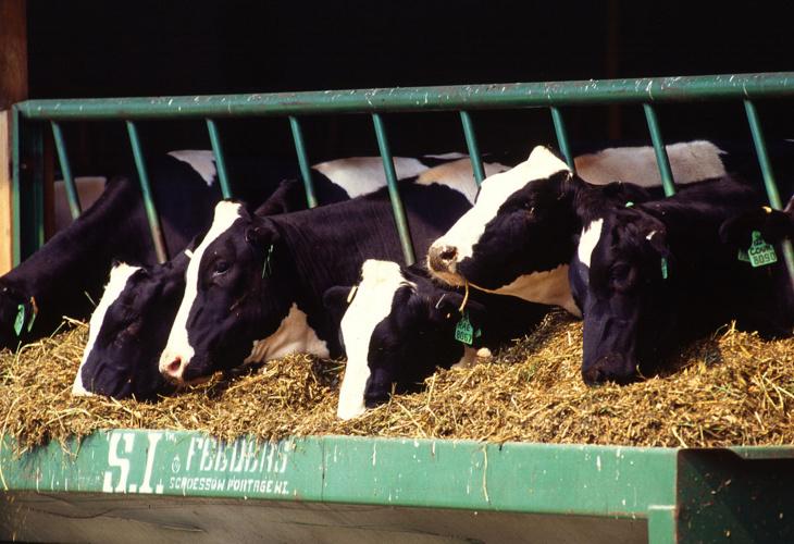 انطلاق عملية تسويق الأعلاف المركبة المدعمة لفائدة مربي الأبقار بجهة مراكش أسفي