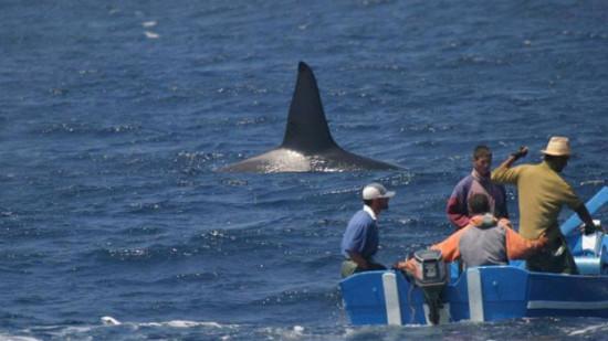 هذه حقيقة خبر وجود القرش بسواحل الشمال الذي خلق فزعا في نفوس المصطافين