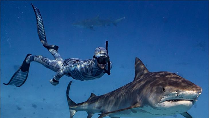 الآن بإمكان الغواصين التخفي عن أسماك القرش بفضل بِذلة غوص ذكية