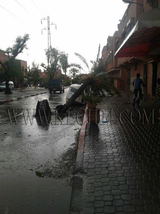 عاصفة رعدية تقتلع أشجارا بمراكش ونخلة تحطم سيارة