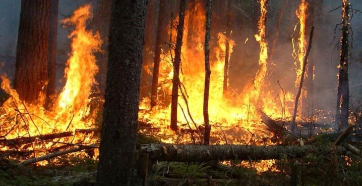 اندلاع حريق غابوي