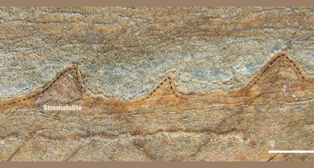 اكتشاف أقدم حفرية في الأرض تعود ل 3.7 مليار سنة