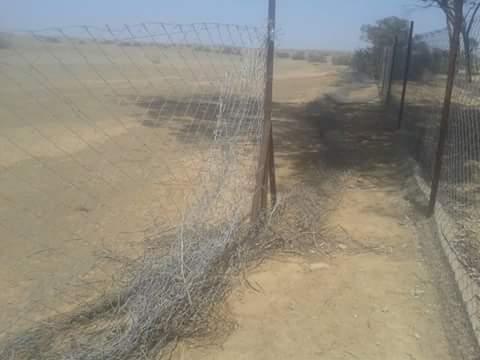 حقوقيو المنارة بمراكش يطالبون بحماية محمية سيدي شيكر وقطيع الغزلان المهدد بالإنقراض + صور