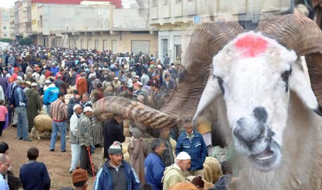 نشطاء يحذرون من طرق غش جديدة لبيع أكباش العيد