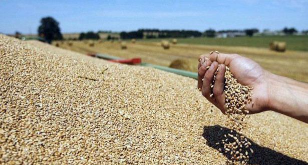 ارتفاع فاتورة واردات المغرب من الحبوب متم شهر يوليوز 2016