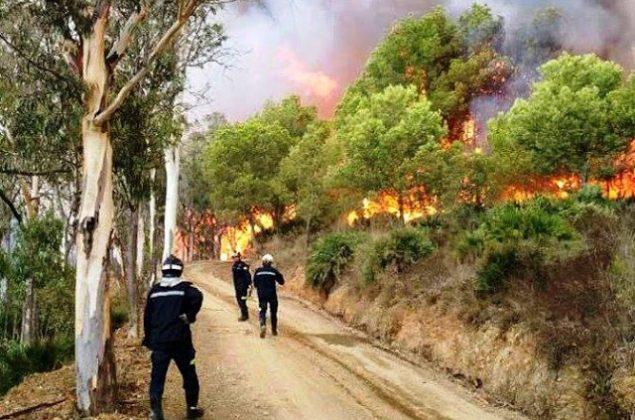 اندلاع حريق في غابة بإقليم شفشاون والسلطات تستعين بآليات إطفاء برية وجرافات وطائرات لإخماد النيران