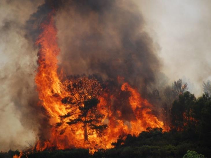 إخماد حريق تسبب في إتلاف عدد من أصناف النباتات بغابة كبدانة