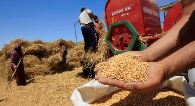 هذا حجم ما استورده المغرب من القمح الأمريكي هذا الموسم