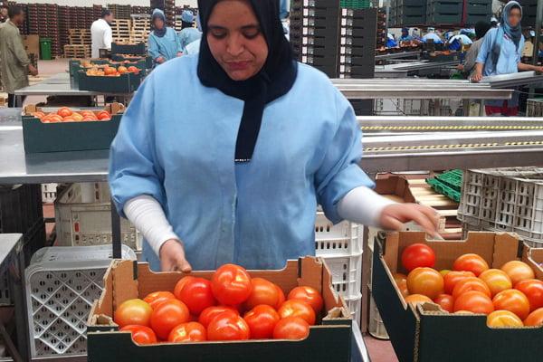 هذا هو سبب الارتفاع الكبير في أسعار الطماطم في مختلف اسواق المملكة