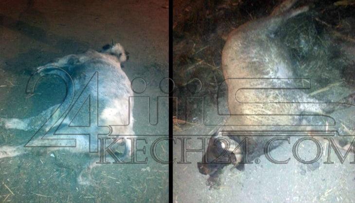 صور صادمة تكشف مظاهر الفوضى والتسيب في المجزرة البلدية بمراكش