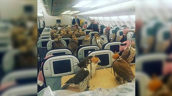 أمير سعودي يحجز 80 مقعدا لصقوره على متن الطائرة