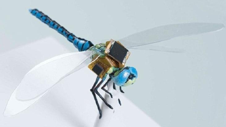 العلماء يطورون حشرة معدلة وراثيا للتجسس..!
