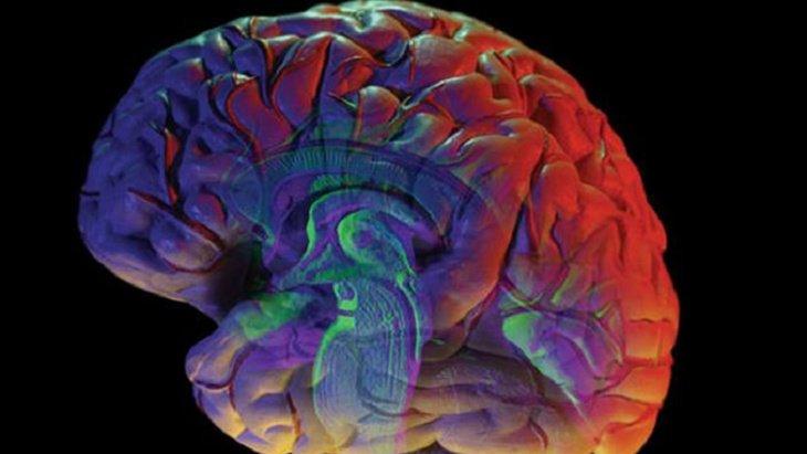 اكتشاف آلية تعمل على وقف نزيف الدماغ الخطير