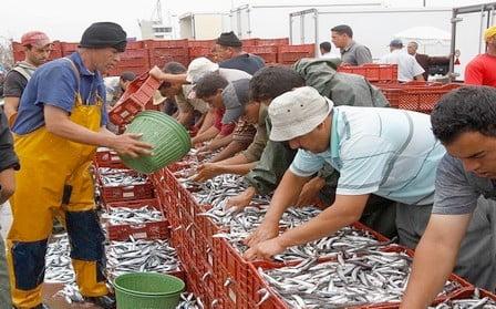 المغرب يحتل المرتبة الأولى إفريقياً في إنتاج الأسماك