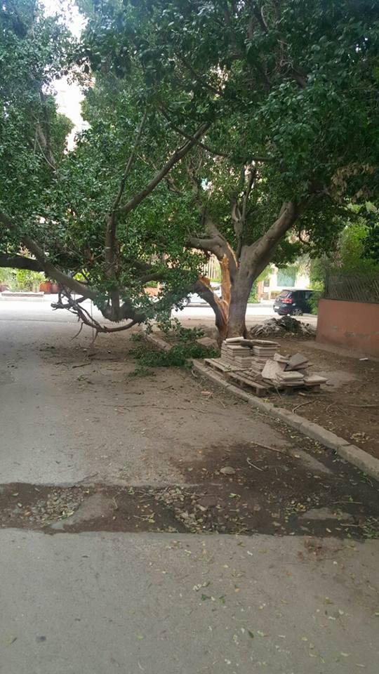 شجرة حطمتها الرياح تعرقل المرور بمنطقة سياحية وسط حي جليز بمراكش + صور