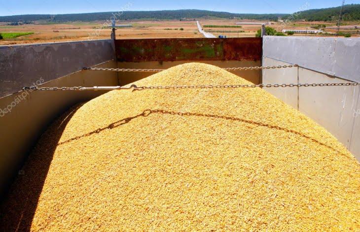 المغرب يستورد 357 ألف طن من القمح الأمريكي في الأسابيع المقبلة