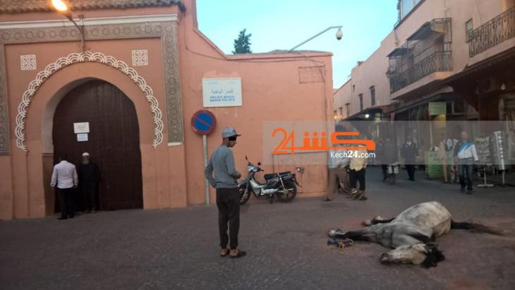 نفوق بغل قبالة قصر الباهية بمراكش + صور